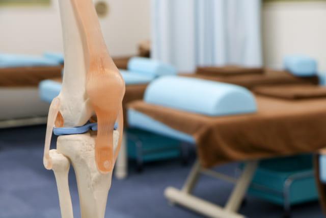 骨や関節や筋の模型2